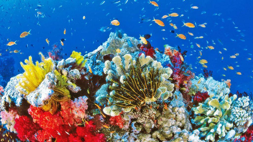 Australia-anuncia-313-millones-de-euros-para-cuidar-la-Gran-Barrera-de-Coral-1
