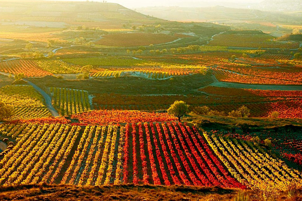 vinos-chilenos2